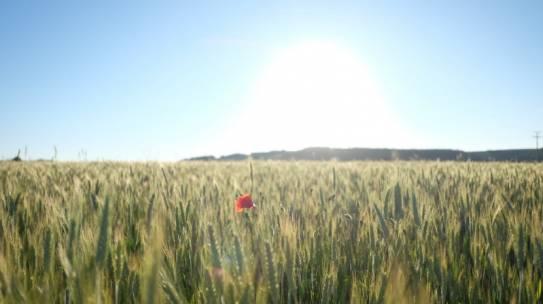 Blühende Felder!
